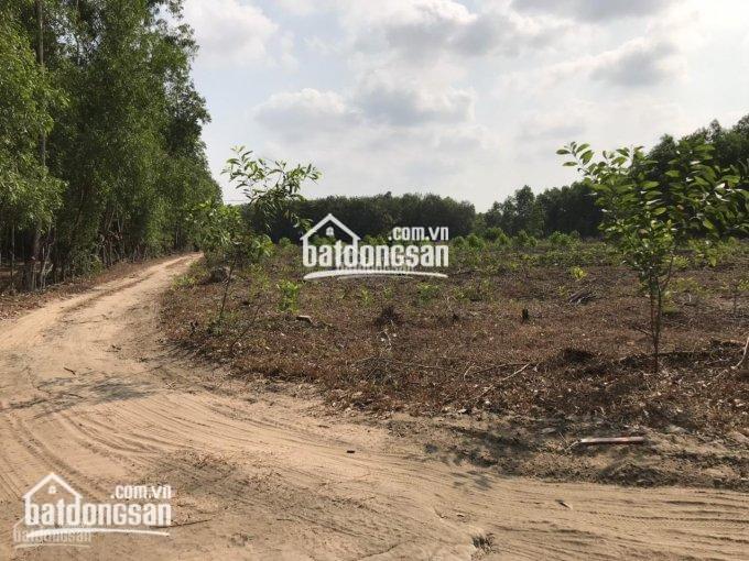 Đất cây lâu năm xã Long An, 3 mặt tiền đường xe hơi giá chỉ từ 2.5tr/m2, 0981666942