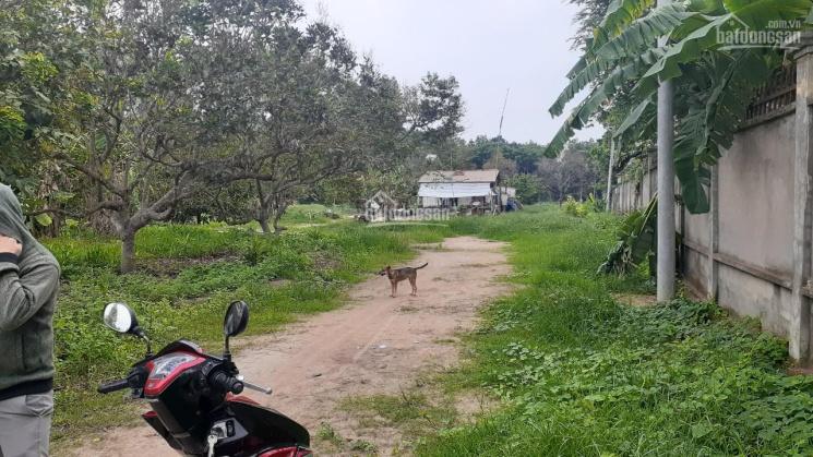 Cần bán gần 1 mẫu đất, 9500m2 gần KCN KBS Đất Cuốc, thuộc thị trấn Tân Thành, Bắc Tân Uyên, BD ảnh 0