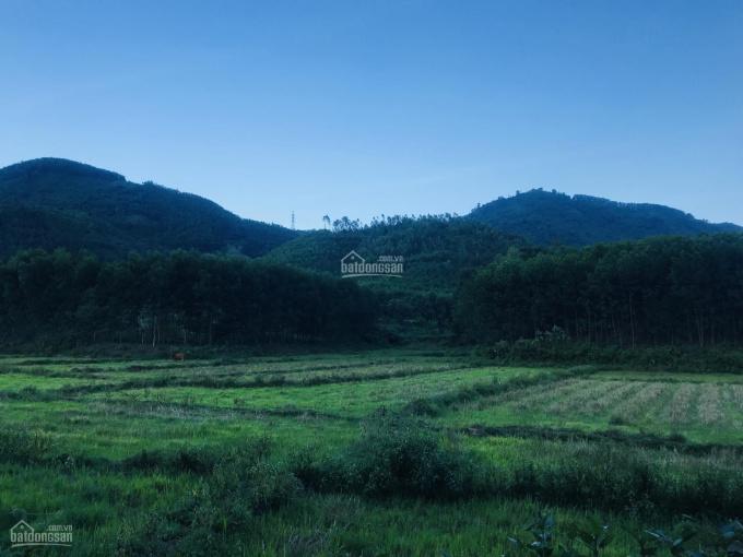 Bà Nà, gần 5 ha đất trồng cây lâu năm, một lô duy nhất - 0972.355.247