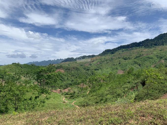 Chuyển nhượng 500Ha đất rừng sản xuất 50 năm, dành cho khách hàng có tầm ảnh 0