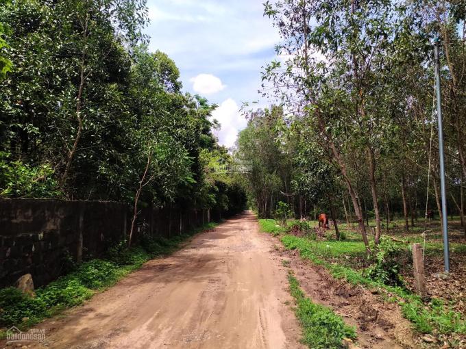 Đất vườn ngay Hồ Châu Pha gần UBND Tóc Tiên, sổ riêng