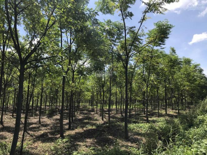 Chính chủ thanh lý đất vườn và tài sản trên đất ảnh 0