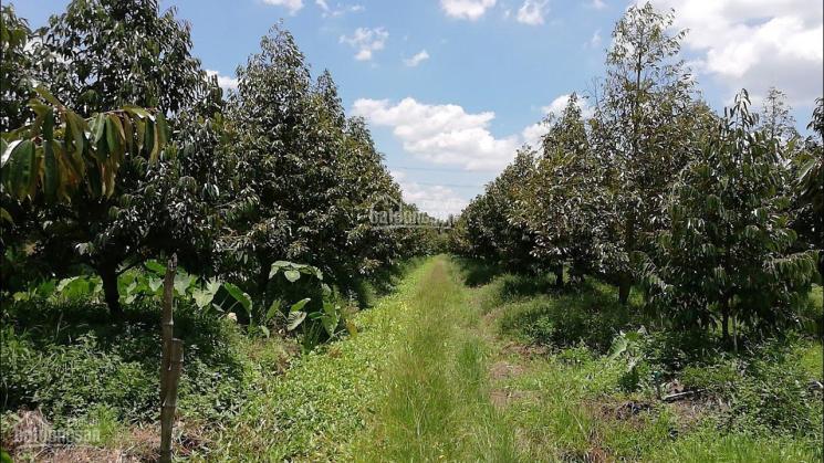 Định cư cần bán đất 17000m2 vườn cây ăn quả, giá 3.75 tỷ, làm khu nghỉ dưỡng, LH 0901803151 ảnh 0