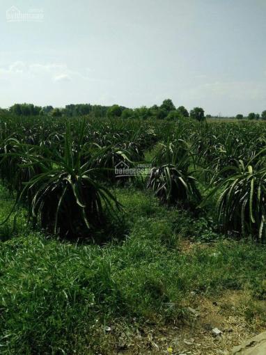 Chia tài sản bán 1.5ha đất 1000 trụ Thanh Long, 2 nhà yến đang khai thác Bắc Bình, Bình Thuận 6tỷ ảnh 0