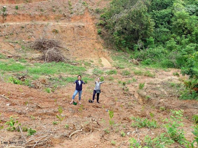 Chính chủ cần bán đất phân lô Nguyễn Hữu Cảnh xã Long Tân, lên thổ cư ngay, giá 4.5tr/m2 ảnh 0