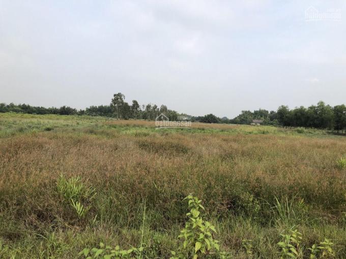 Chính chủ bán đất vườn rẻ nhất Nhơn Trạch, 1260m2, 550 triệu/1000m2, cách Q2 6km theo đường Cát Lái ảnh 0