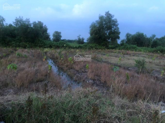 Cần bán đất nông nghiệp đường Kênh 10, sát Vành Đai 3 dự phóng ảnh 0