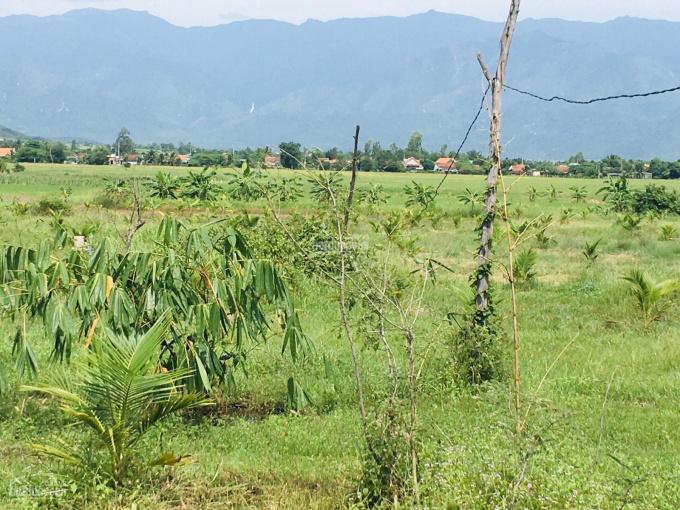 Trang trại gần hoàn thiện tại Ninh Xuân, Ninh Hoà