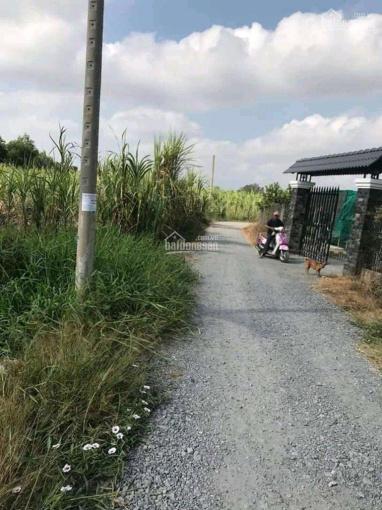 Bán 500m2 đất vườn đường xe tải Lộc Trung, xã Mỹ Lộc, huyện Cần Giuộc, Long An ảnh 0