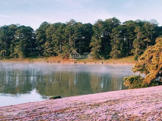 Đất nền Đà Lạt nghỉ dưỡng biệt thự vườn sổ hồng công chứng ngay ảnh 0