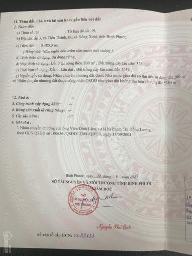 Bán đất trồng cây cao su 11 năm tuổi phường Tiến Thành, thành phố Đồng Xoài, Bình Phước ảnh 0