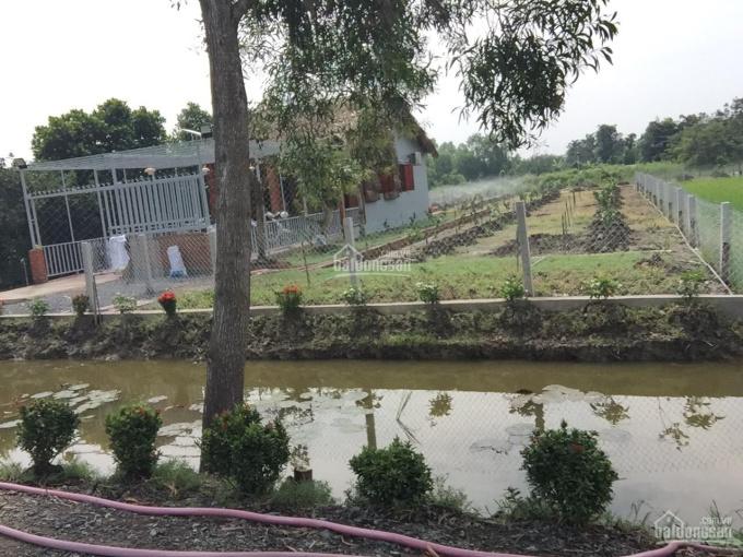 Chính chủ bán đất nhà vườn thổ cư 1715m2 Xã Mỹ Lộc, SHR có sẵn nhà: 2,5tr/1m2 LH: 0978205883 ảnh 0