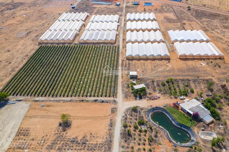 Bán đất khu trang trại dưa lưới Văn Minh, điện nước có sẵn xe tải vào tận nơi - 0706.017.007 ảnh 0