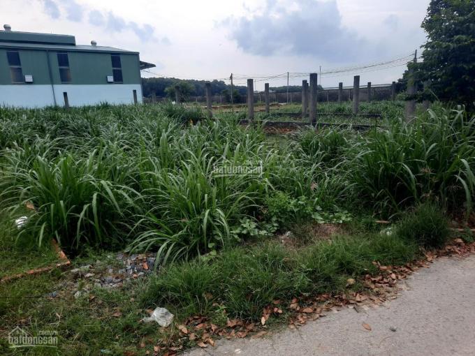 Cần bán gấp đất đường Lý Tự Trọng, Long Tân, Nhơn Trạch, Đồng Nai, 80m2, 900 triệu, SHR, 0934022125 ảnh 0
