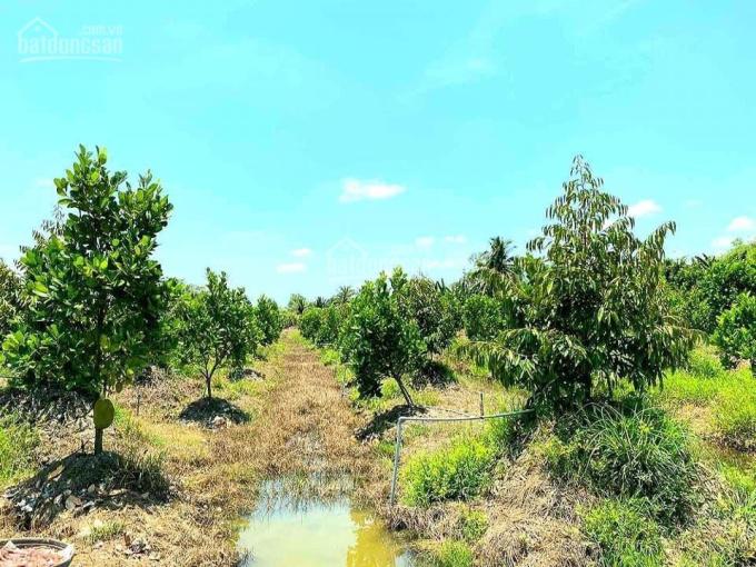 Bán 14 công đất trồng mít và sầu riêng gần cầu Bình Phú