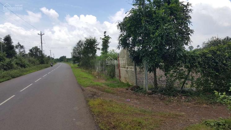 Bán đất vườn mặt tiền đường nhựa Thọ An - Bảo Quang - TP. Long Khánh ảnh 0