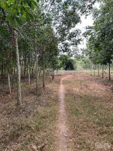 Bán đất xã Hòa Bình, huyện Xuyên Mộc, Bà Rịa VT, diện tích 8587m2. Giá trả trước 650tr/1000m2 ảnh 0