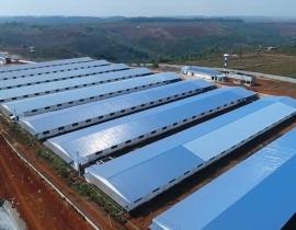 Bán trại heo đường 25B, Xã Bàu Cạn, Long Thành, Đồng Nai, gồm 10.000 con heo, DT 80.000m2
