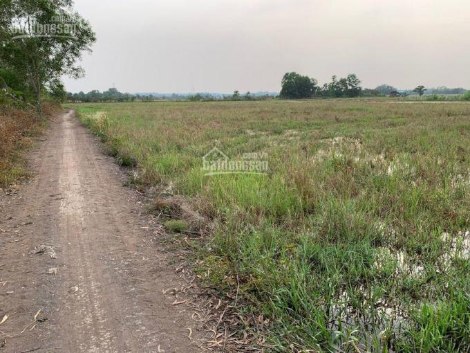 1,13 triệu/m2 đất An Tây 68 đi vào 200m DT 2050m2 CLN, giá ngang 41x50m ảnh 0