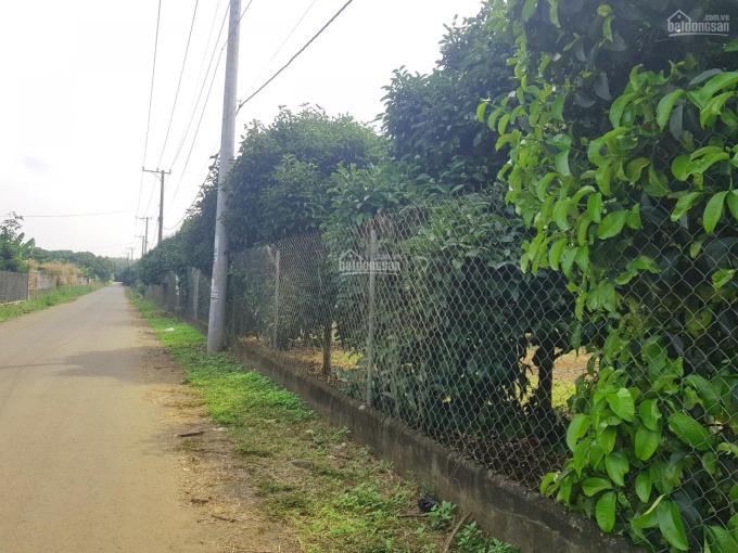 Cần bán 5000m2 đất vườn lên được thổ cư tại ngã tư Dầu Giây, giá: 2 triệu/m2, LH: 0355 035 085 ảnh 0