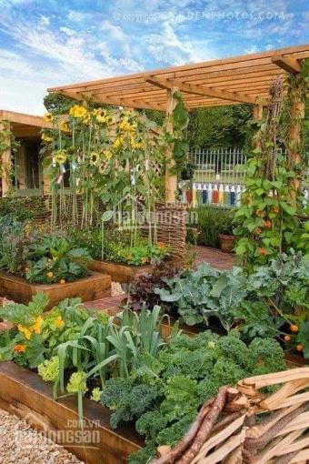 Bán đất làm nhà vườn nghỉ dưỡng tại Nhơn Trạch, cách Sài Gòn 5km ảnh 0