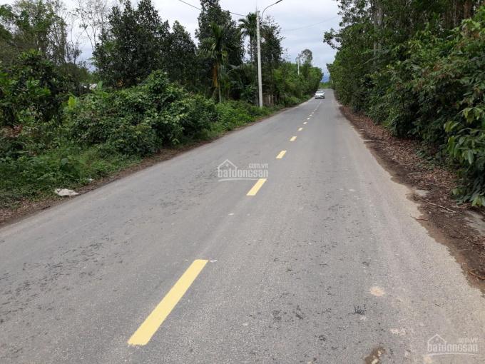 2 Hecta đất rừng sản xuất không có đất ở, đẹp, Hoà Phú