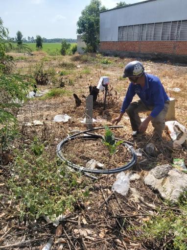 Chính chủ cần bán gấp 3 lô đất tại Xã Tân Phước, Huyện Tân Hồng, Tỉnh Đồng Tháp ảnh 0
