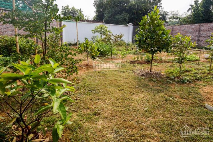 Bán nhà vườn đẹp với đủ loại cây ăn trái ở ngoại thành Hà Nội