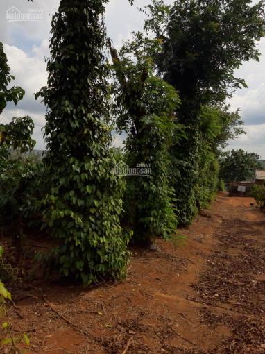 Cần bán gấp 1ha8 cà phê ở km65 huyện Krông Buk thuộc xã Ea Sin. LH 0909074779 ảnh 0
