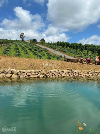 Cần bán đất nền tại Lộc Phát, Bảo Lộc view đồi cực đẹp, giá chỉ từ 850 tr/ nền ảnh 0