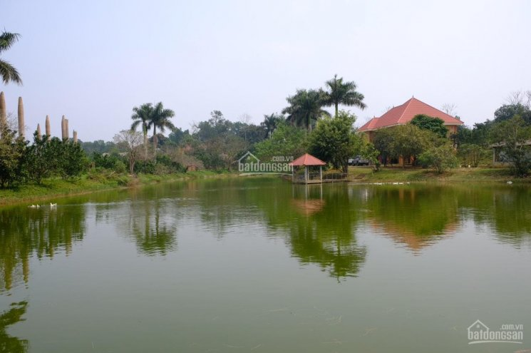 Cần chuyển nhượng lô đất 11000m2, 1200m2 đất ở tại Yên Bài, Ba Vì - Giá 1.x triệu/m2, x nhỏ