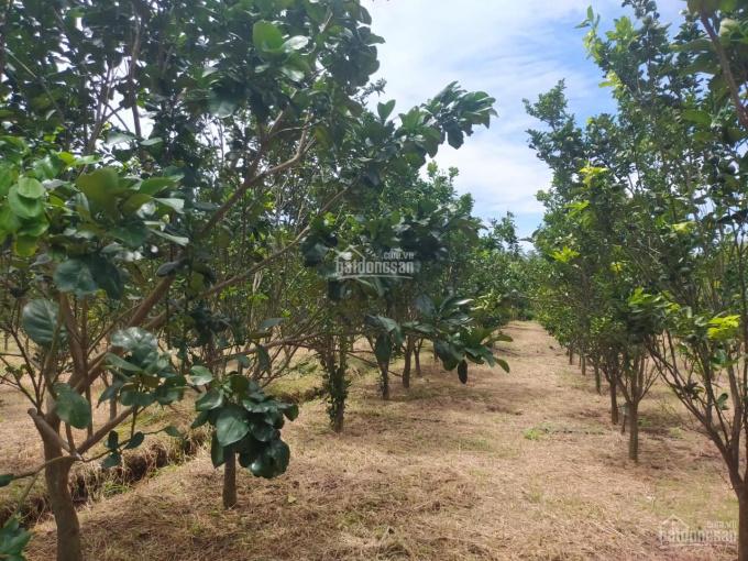 Đất vườn Lang Minh, Xuân Lộc, Đồng Nai, 3750m2, giá 1,2 tỷ ảnh 0