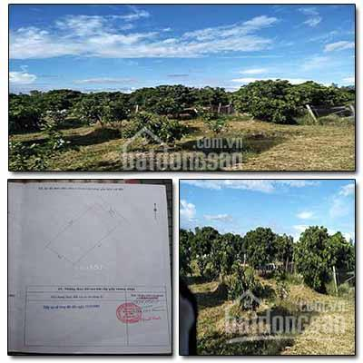 Chính chủ cần bán 7.494m2 đất vườn nhãn, cạnh Quốc Lộ 54, xã Định Hòa, Lai Vung, Đồng Tháp ảnh 0