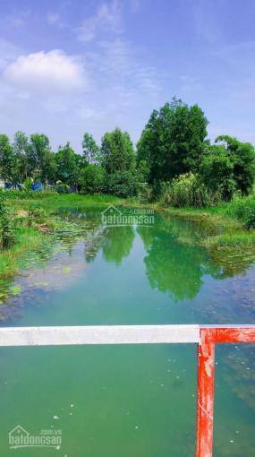 Bán đất MT sông lớn Phạm Thái Bường, Phước Khánh, giá 1,65tr/m2, đường ô tô ảnh 0