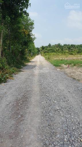 Đất CLN Phước Khánh đường ô tô, khu dân cư, sát Phạm Thái Bường, giá 1,68 tỷ/1000m2 ảnh 0
