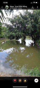 Bán Gấp 11ha Nhà Đất Rẫy Xã ĐakGần Huyện Dakmil ĐakNông