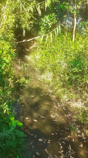 Cần bán đất đang trồng tiêu điều Bù Gia Mập, Bình Phước ảnh 0