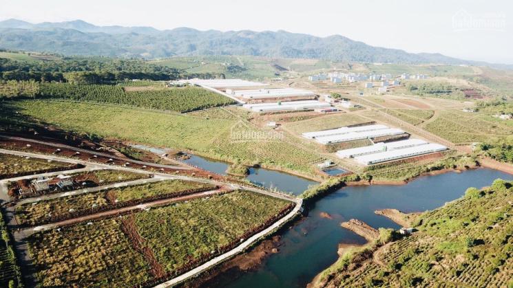 A/C xem đất Bảo Lộc đừng bỏ qua dự án này: View đồi chè 200m2 TC full 100m2, giá 585 tr/nền ảnh 0