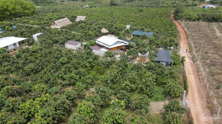 Cần bán 1 sào đất nằm gần Hồ Trị An, gần KCN Định Quán, giá chỉ 550 triệu/1000m2 tại Định Quán ảnh 0