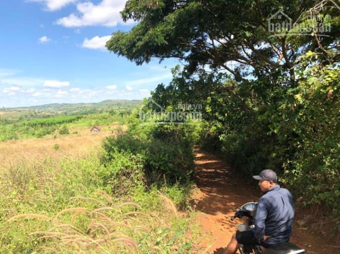 Cần bán 19784 m2 đất nông nghiệp tại huyện Chư PRông, tỉnh Gia Lai ảnh 0