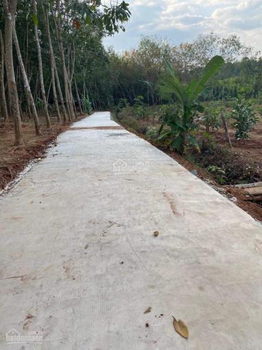 Bán 3,2 sào đất trồng mít có 80m mặt đường bê tông giá cực rẻ 1 tỷ ảnh 0