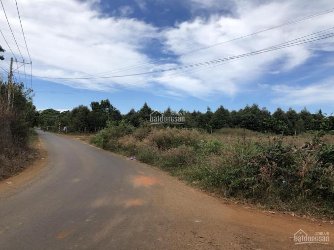 Cần bán đất Phường Bàu Sen, thành phố Long Khánh ảnh 0
