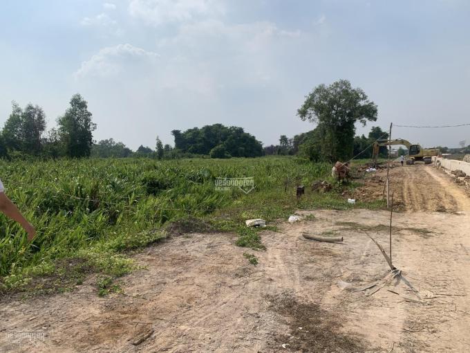 Bán đất mặt tiền sông Sài Gòn (30.000m2) 3 hecta xã Phú Hoà Đông, Huyện Củ Chi, TPHCM ảnh 0