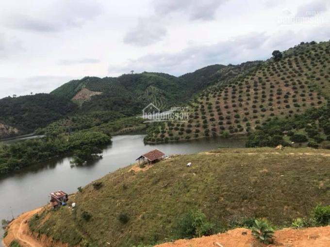 Chính chủ cần bán 3 mẫu rưỡi ở huyện Cát Tiên, Lâm Đồng ảnh 0