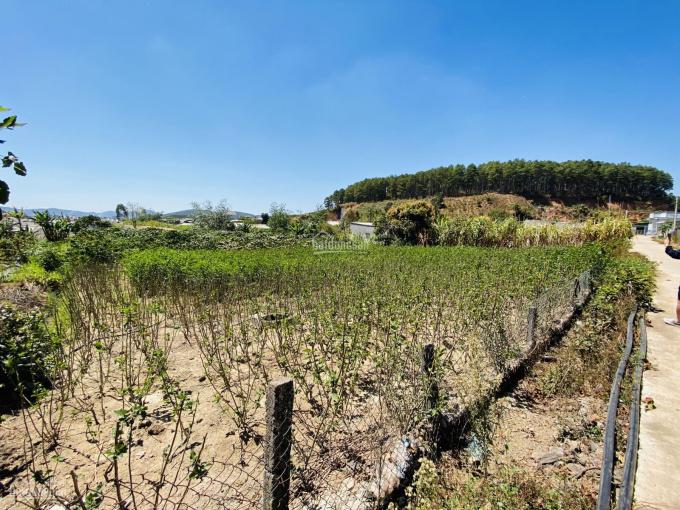 Bán 2.200 m2 đất TT Mê Linh sẵn 200 m2 thổ cư, cách chợ Đà Lạt 20 km, giá chỉ 2.3 tỷ ảnh 0