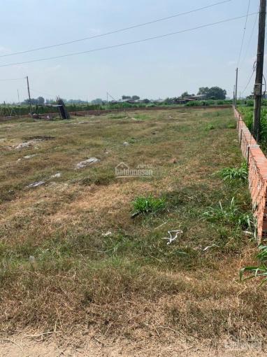 Bán lô đất cây lâu năm xã Tân Thạnh Đông, huyện Củ Chi, TPHCM giá rẻ ảnh 0