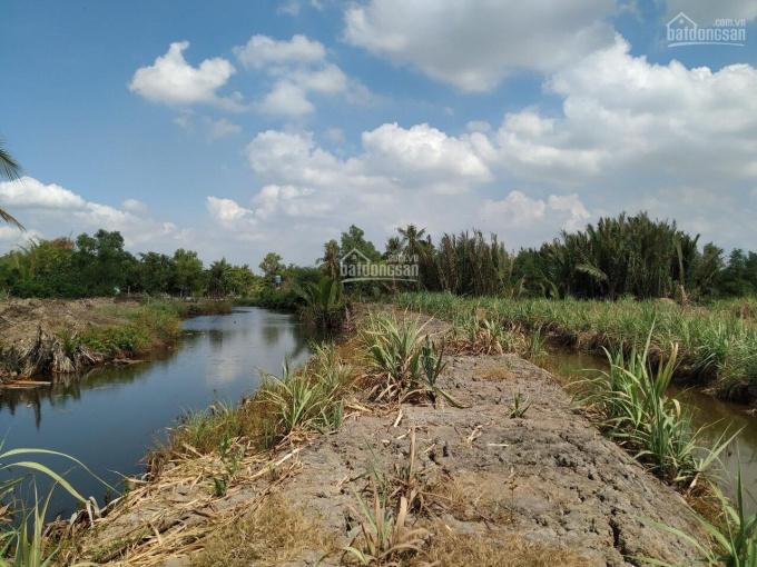 Bán đất ruộng, vườn sinh thái mặt tiền sông, rạch lớn cạnh dự án Vingroup xã Phú Đông, Nhơn Trạch ảnh 0