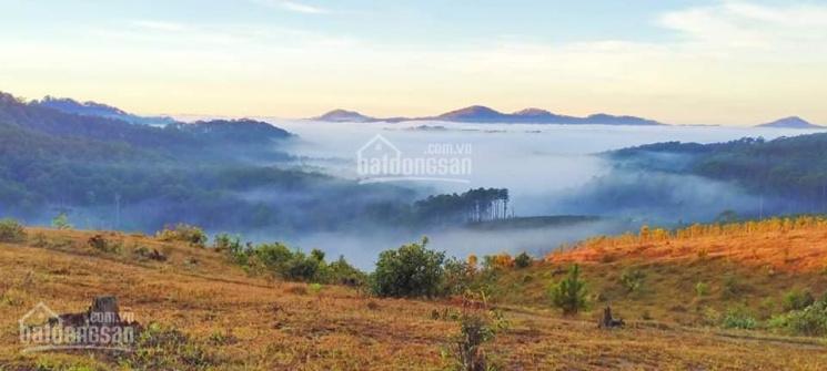 Bán đất sổ riêng nông nghiệp 0989703968. Đạ Sar - Lạc Dương - Lâm Đồng ảnh 0