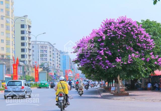 Đất mặt phố Đào Tấn, Ba Đình, Hà Nội: 160m2, MT 7m. Giá 55 tỷ ảnh 0