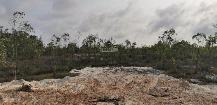 Bán đất trồng cây bạch đàn sổ đỏ riêng giá 2 tỷ/ 1 ha - LH: 0917.186.116 ảnh 0